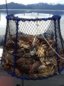 crabs 020-tinyjpg